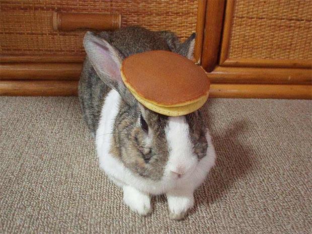 Want a pancake?